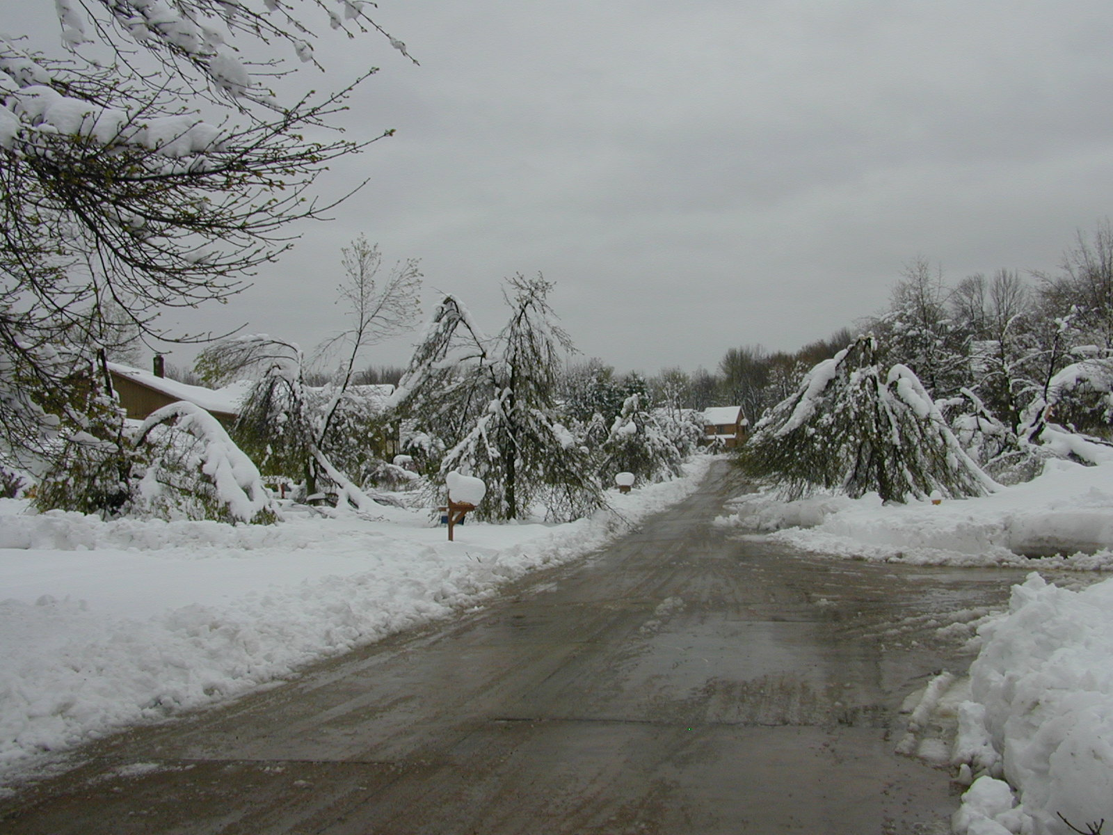 Fallen trees and trees with branches weighed down from snow