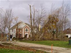 Damaged trees around house